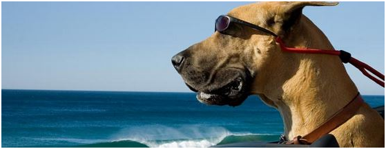 Buy the Sunglasses Marmaduke Wears in Marmaduke